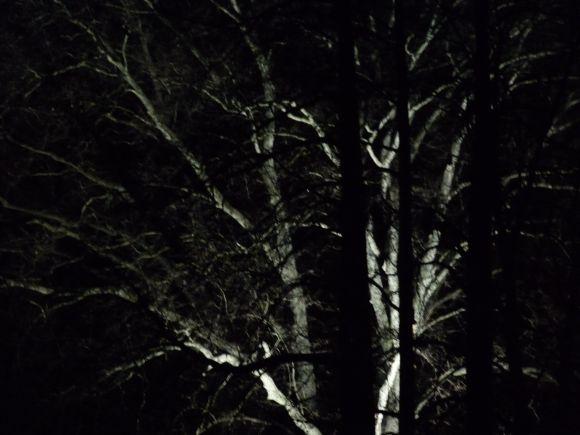 http://anneau2fer.cowblog.fr/images/8decembre/P1000987.jpg